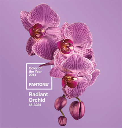 Pantone Color of the Year 2014, Radiant Orchid